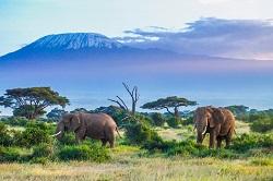 Safari: welke landen zijn de toppers