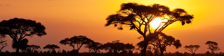premier safari
