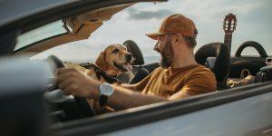 hond autovakantie