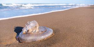 piqûre méduse